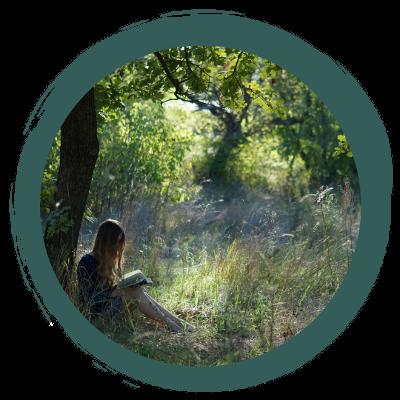 Wald-Poesie