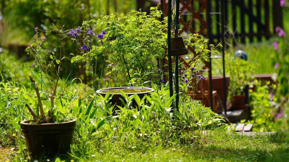 Naturschwaermer Maerz Insektengarten