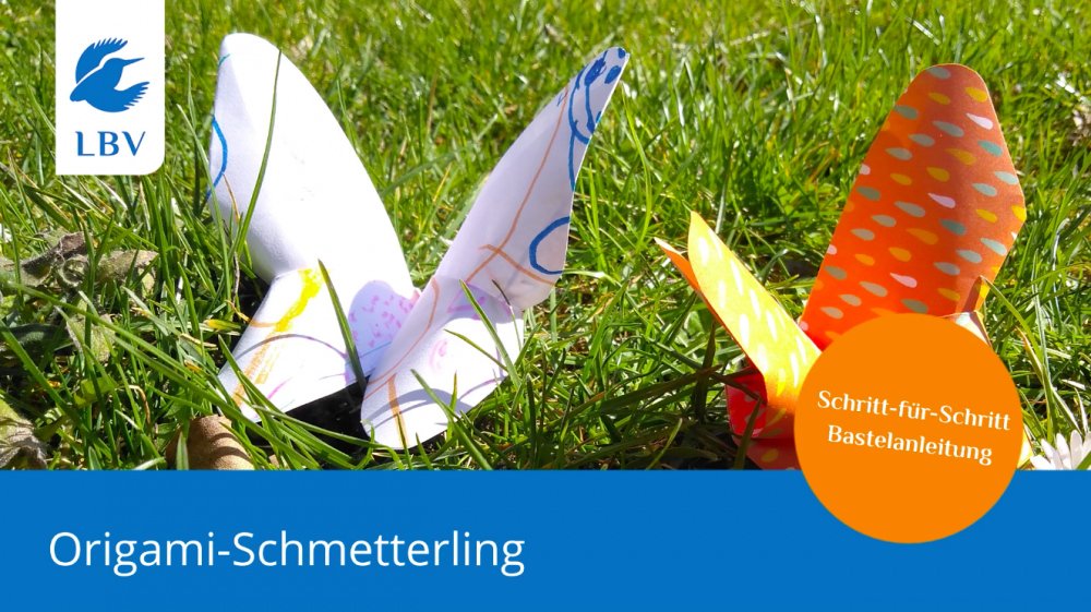 Video-Faltanleitung Origami-Schmetterling