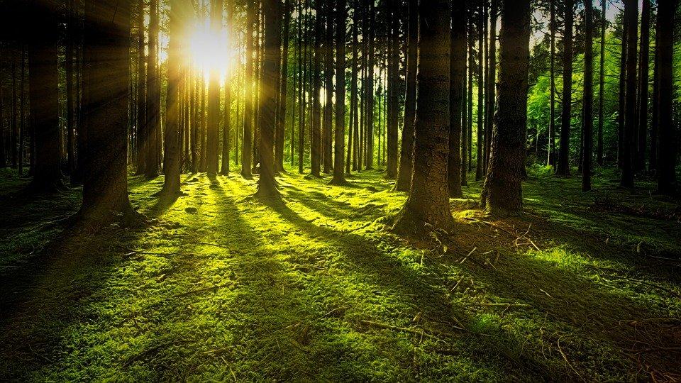 Naturschwaermer Mai Wald