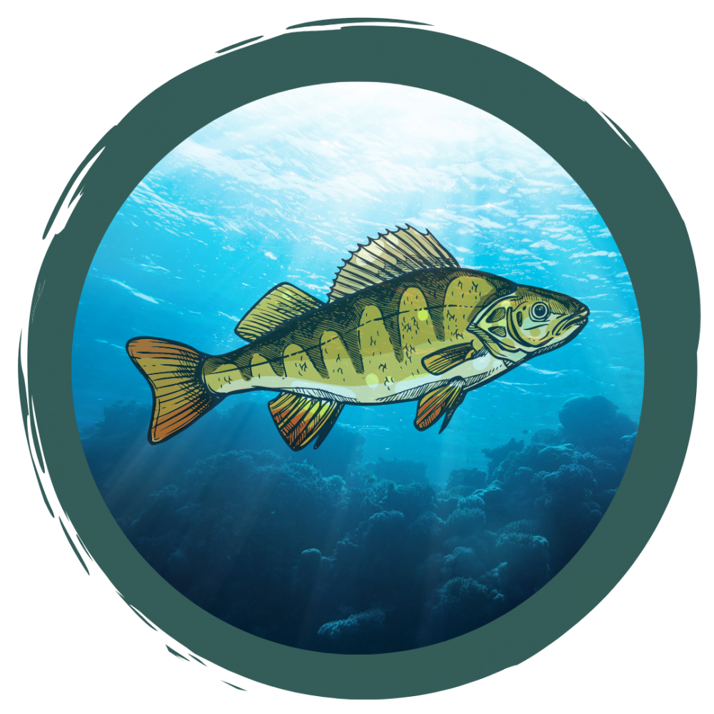 Der Bauplan der Fische
